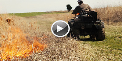 MRM Native Grass Fire